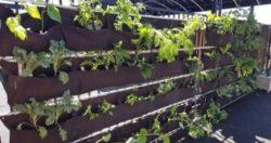 Vegetable Planting Fun!